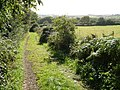 Track to Andrew's Wood Nature Reserve - geograph.org.uk - 243643.jpg