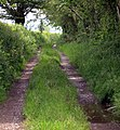 Track to Gorrig - geograph.org.uk - 1344818.jpg