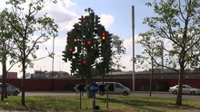 File:Traffic Light Tree from southeast in June 2014 2.ogv