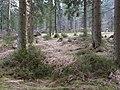 Trail from Sonnenberg to Rehberger Planweg 04.jpg