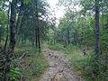 Trail to Hughes Mountain.JPG