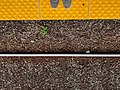 Train tracks at Rosedale Station in Toronto - (20180909173954).jpg
