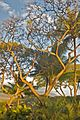 Tree (4597538152).jpg