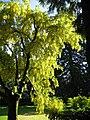 Tree - geograph.org.uk - 79895.jpg