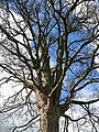 Tree and rope near Libanus - geograph.org.uk - 754420.jpg