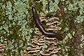Tree at night (43833162535).jpg
