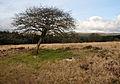 Tree in circle on Lakehead Hill.jpg