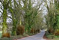 Tree lined road near Cowley - geograph.org.uk - 374584.jpg