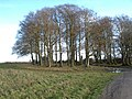 Trees on Salisbury Plain - geograph.org.uk - 302651.jpg