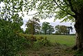 Trees south of the High Weald Landscape Trail - geograph.org.uk - 1288324.jpg