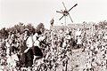 Trgatev v Jeruzalemu 1961 (5).jpg