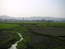 Green agricultural field, with a hill range far in the background.