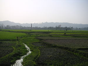 Dhalai district - Ricefields in Dhalai