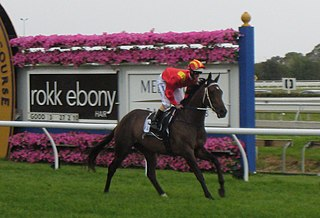 Typhoon Tracy Australian-bred Thoroughbred racehorse