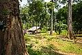 USAID Measuring Impact Conservation Enterprise Retrospective (Philippines; Nagkakaisang Tribu ng Palawan) (39581655644).jpg