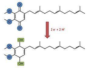 Cytochrome d - Ubiquinol to Ubiquinone reaction