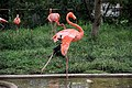 Ueno zoo, Tokyo, Japan (1285439905).jpg