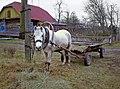 Ukraine Pferd wartet.jpg