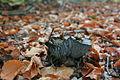 Unidentified fungi, delden, overijssel, the netherlands34.JPG