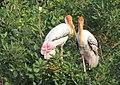 Vedanthangal Bird Sanctuary 04.JPG