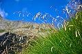 Vegetazione alpina.jpg