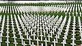 Verdun, Soldatenfriedhof.jpg