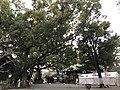 View of Haiden of Kitaoka Shrine.jpg
