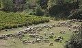 Vignes Haute Provence.jpg