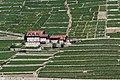 Vignoble de Lavaux à Saint-Saphorin - img 03578.jpg