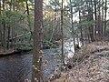 Virginia State Park after super storm Sandy32.jpg