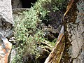Vizcachas de Amaru huaycco - panoramio.jpg
