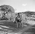 Vrouw en kind op ezel met watertonnen op Bonaire, Bestanddeelnr 252-8370.jpg