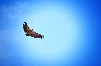 VultureCulture.jpg