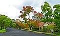 Waimea Road, Lindfield, New South Wales (2011-04-28) 01.jpg