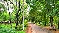 Walk way;national botanical garden Bangladesh.jpg