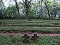 War Cemetery Helenenberg 2.JPG