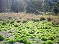 Westerfolds Park plain.jpg