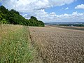 Wheat field at foot of North Downs - geograph.org.uk - 2541977.jpg