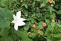 White Flower at Indo Bhutan Border at Darranga in Assam.jpg
