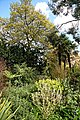 Wild Garden at Myddelton House garden, Enfield, London.jpg