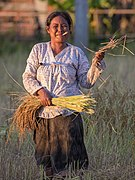 Woman with hand-rolled cigarette cutting rice.jpg