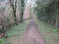 Woodland Track to Elvington Lease - geograph.org.uk - 1767046.jpg