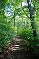 Woodland above Baslow - geograph.org.uk - 579082.jpg