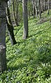 Woodland below Ballakilpheric - geograph.org.uk - 5220.jpg