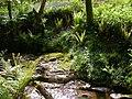 Woodland habitat near Dyemill - geograph.org.uk - 273406.jpg