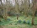 Woodland scene - geograph.org.uk - 1219482.jpg