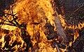 Wraxall 2013 MMB 35 Bonfire.jpg