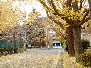 Yokohama City University - The clock tower in autumn