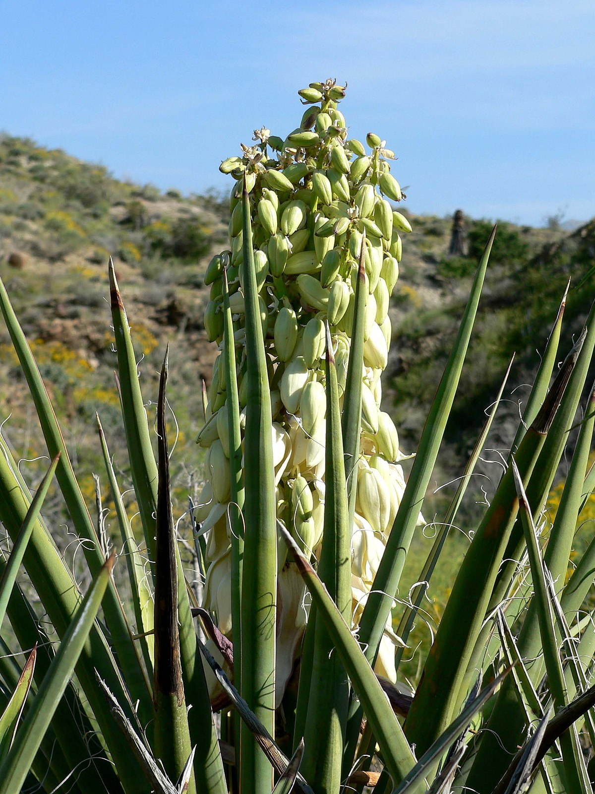 Yucca Extract In Dog Food Seizures
