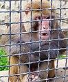 Zoopark Baku 215.jpg